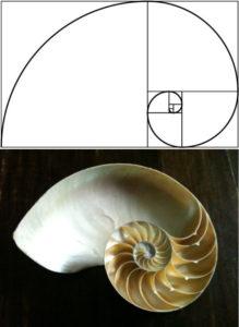 shell-golden-ratio